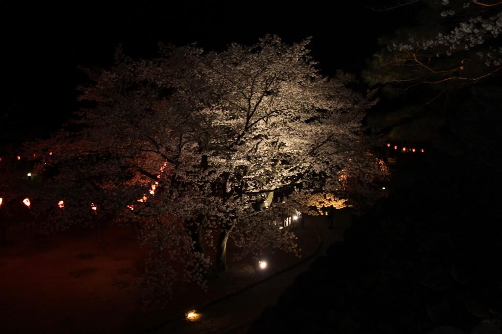 懐古園桜まつり2