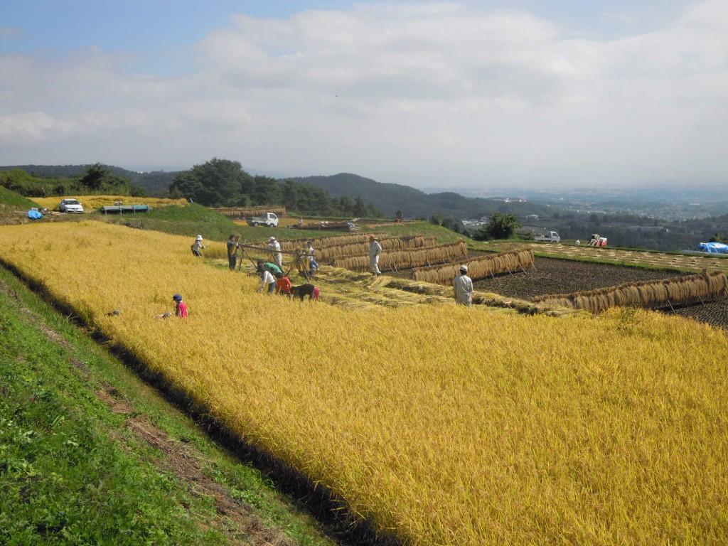 稲刈り体験ツアー 018