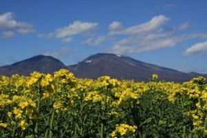 菜の花と浅間山