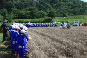 2小麦の栽培について質問