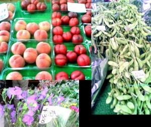 夏野菜と果物