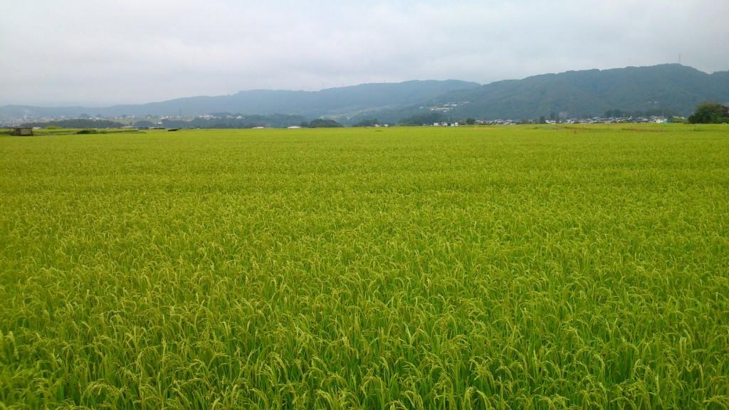 三岡の水田地帯