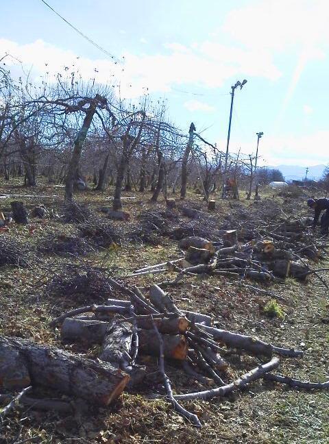 福井りんご園 木2