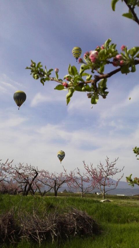 5月3日福井りんご園 (1)